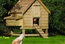 Home Ideas for my chickens!