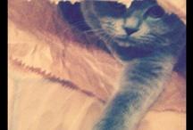 My beautiful Chloe'