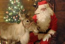 Christmas in Athlone / There are plenty of festive activites for all the family in & around  Athlone