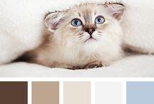 colors~ / by Linda Beckman