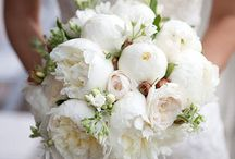 pt nunta