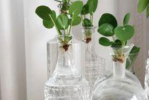 kasveilla stailaaminen