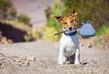 Tiere / Hunde in unterschiedlichen Positionen