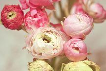 Flowers - Peonies