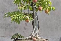 Unique bonsai