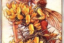 FlowerFairies/ Cicely M Barker / These prints are so charming.  A lot of cross stitch patterns have been created using these prints.  The larger size  prints are from Russian sites.