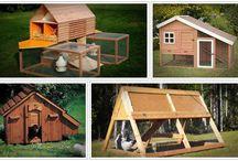 Chicken coop guides revie