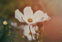Flower Power Love