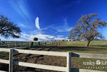 California Central Coast Photography / Gorgeous, breathtaking photographs of Santa Ynez Valley and Central Coast California by Tenley Fohl. Canvases available for purchase in different sizes at Jetset Times Shop http://jetsettimes-shop.com/collections/tenley-fohl-photography / by Jetset Times