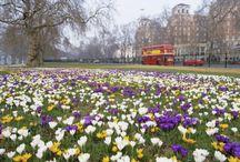 Primavera / Risveglio della natura con i suoi colori ,i suoi odori,la luminosità ....un vero invito a uscire di casa.....