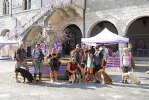 Dog Walking d'estate a Venzone (agosto 2015) / Bellissimo dog walking estivo a Venzone (Friuli Venezia Giulia), cittadella medioevale con tuffo nel Fiume Tagliamento