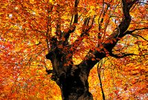 Amazing Trees / by Sherrie Fuscone
