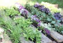 How To Start An Herb Garden