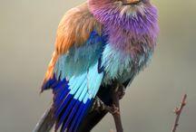 Aves / Aves do mundo