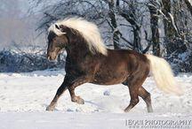 Horses/Silver dapple/Liver chestnut