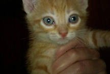 GATOS PEQUEÑOS / Tod@s nuestr@s pequeñ@s esperan un hogar antes de hacerse mayores y aumenten sus posibilidades de encontrar a alguien que les quiera. Escríbenos a: adopciones@asociacionlara.org si quieres adoptar un gat@ o a: acogidas@asociacionlara.org si puedes acogerl@.