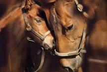 Animals_love_Humanity