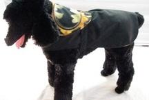 Doggie Raincoats / stylish raincoats for dogs
