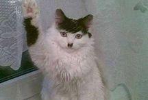 Hitlerin näköiset kissat / Cats look like Adolf Hitler