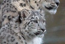 Ather big cats / by Gisela Sedlmayer