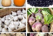 Root Crops & Tubers / Root crops are extremely dense in nutrients and are easy to grow. And most importantly, each root vegetable type has different health benefits that lead to a well-balanced diet. Potatoes, sweet potatoes, yams, beets, carrots, parsnips, onions, turnips, rutabagas, yuca, kohlrabi, garlic, ginger, celery root (or celeriac), Jerusalem artichokes, horseradish, daikon, turmeric, jicama, and radishes are all classified roots.