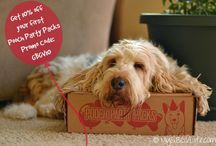 Dogs: Product Reviews