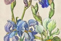 botânica lirica