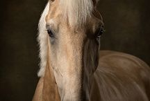 EqSP Equine Studio . Photography / Horse Photographer. Studio style equine portraits. Horse & owner photo-shoots for personal & business use. Gift Vouchers. Fine art and contemporary print. Equine stock images. Midlands & UK