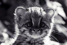 Animals / by Suzy Blazak