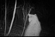 My Wildlife Camera / Pictures taken with my wildlife sensor camera / by Dan Hernandez