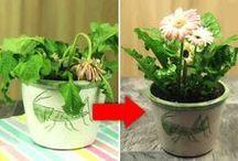 reanimarplantas