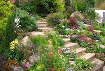 Yard and Garden / by Charity Munoz