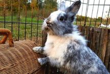 Rabbits / Malgosia's Rabbit Shelter is a safe heaven for bunnies that are seriously ill and need special care. Some of rabbits are available for adoption. Help us by sharing