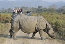 Global Wide Safaris