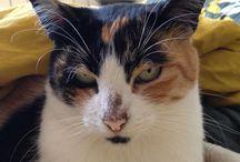 Mappy / El meu altre amor... la gata més guapa del món!