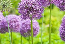 For the Garden / by Rosemary Jorden