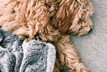: Puppy love :