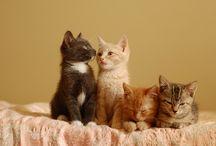 Cats & Kittens! / Adorable Kitties