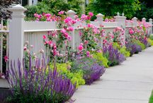 Gardens and Landscaping / Gardens and Landscaping Ideas
