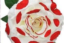 flores flamencas / by Laura cross