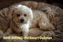 Cullman Jobs / The latest job and career opportunities in Cullman county Alabama.