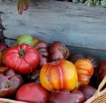 You Say TOMATO... / All things tomato