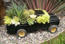 JARDÍN - Cactus y Suculentas