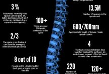 facts about your spine