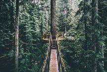 Bridges & trees ❤️✨ / Podul-tranzitia din viata unui om