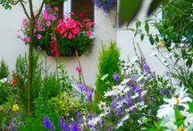 květiny a zátiší