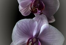 Orchidee / Orchidee