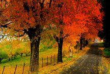 Autumn / Everything Autumn