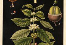 Botanical ilustrations