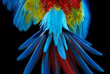 Feathered Friends / The amazing world of birds!